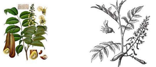 Baume du Pérou sur la peau